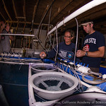 Laurie MacLaughlin  from NOAA visited the Coral Restoration Foundations lab on  and helped Justin Zimmerman from SeaWorld place fertilized elkhorn coral (A. palmata) in the larval rearing bi ...