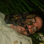 Coconut crab 'attacks'. We ate it. It was good. On Enemat.