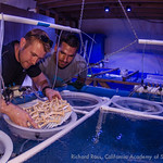 Rick Klobuchar and Jordan Ward from the Florida Aquarium prepare substrate on which swimming elkhorn and staghorn larvae settle.