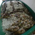 Ebeye fish market