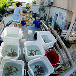 Teams from the Florida Aquarium, Californina Academy of Sciences, Mystic Aquarium, SeaWorld Orlando, Disney's Living Seas, Akron Zoo, and Coral Restoration Foundation, unload staghorn corals ...